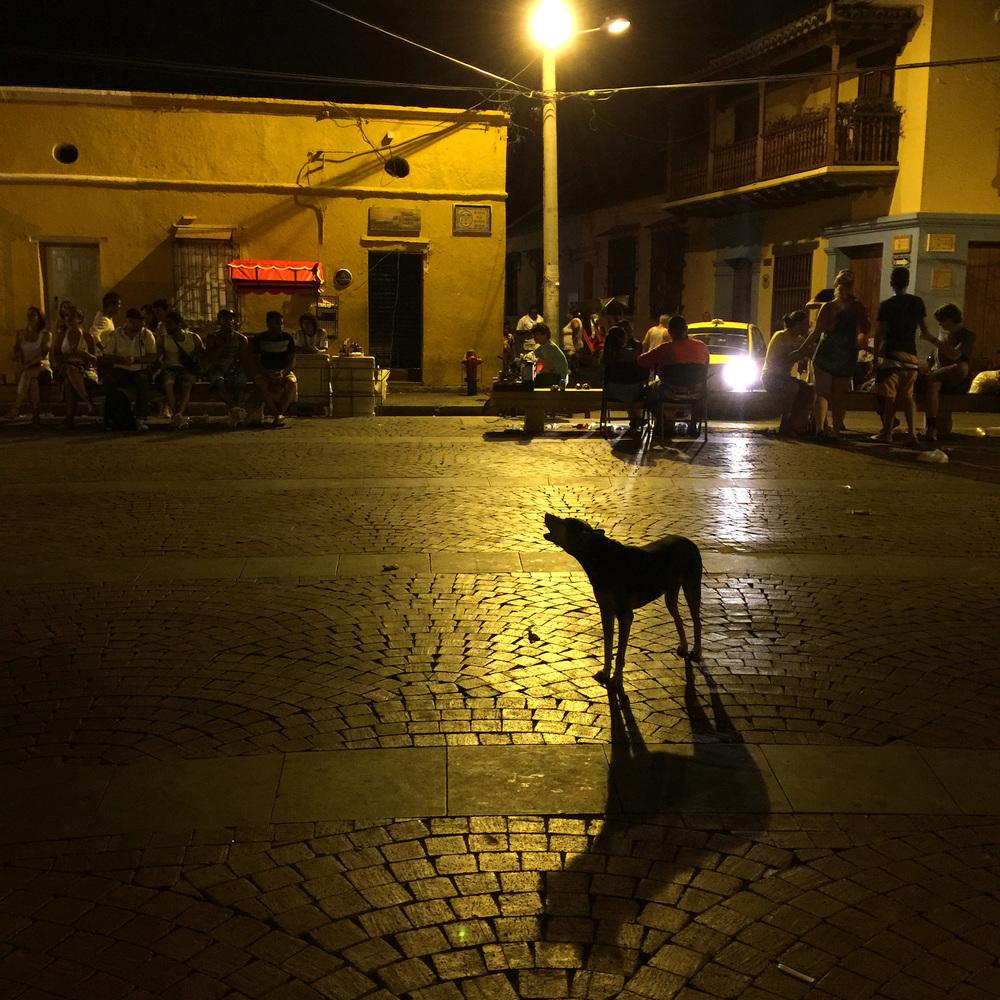 dog barking in cartagena.jpg