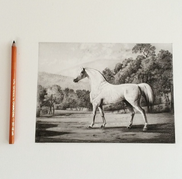 'Mambrino by George Stubbs' 2014  Charcoal on paper.