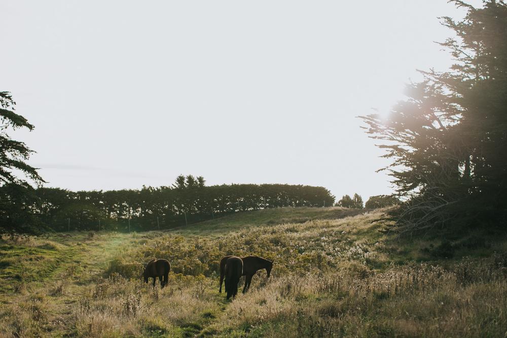 Ariana & Tim Engagement - Dunedin, New Zealand South Island - Samantha Heather Photography-1.jpg