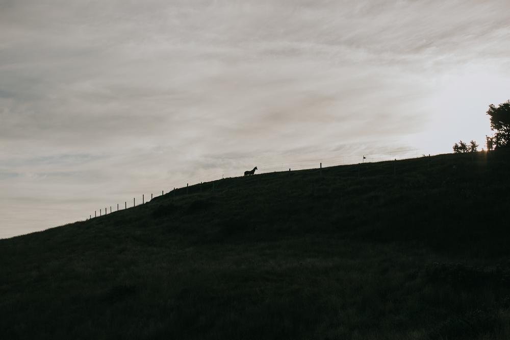 Ariana & Tim Engagement - Dunedin, New Zealand South Island - Samantha Heather Photography-5.jpg