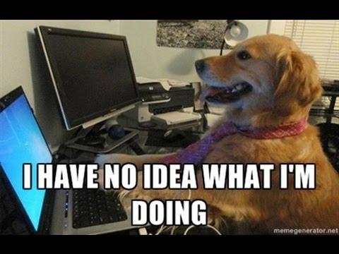 404dog.jpg