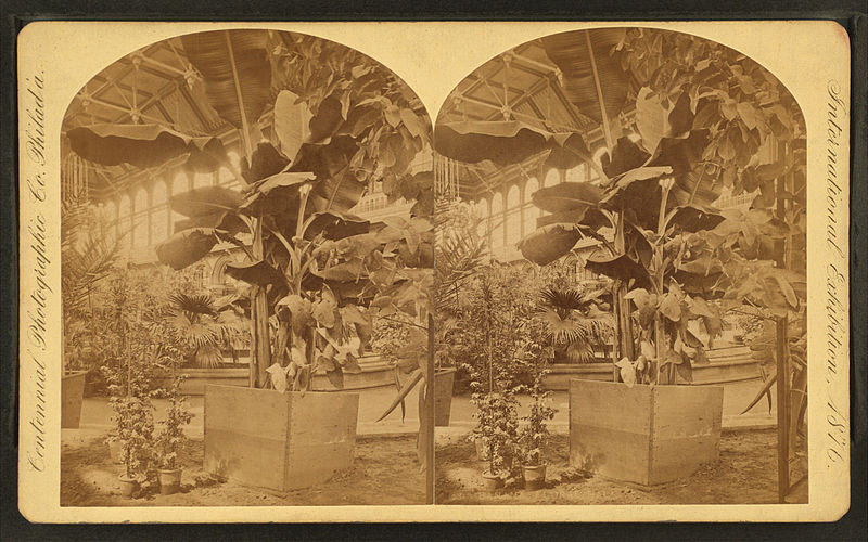 Stereogram of banana trees on display at the 1876 Philadelphia Centennial Exhibition.
