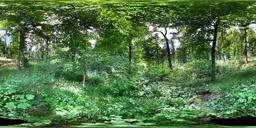Wald Therwil