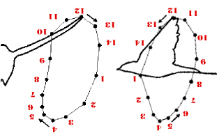 Diagram of swallow flight pattern