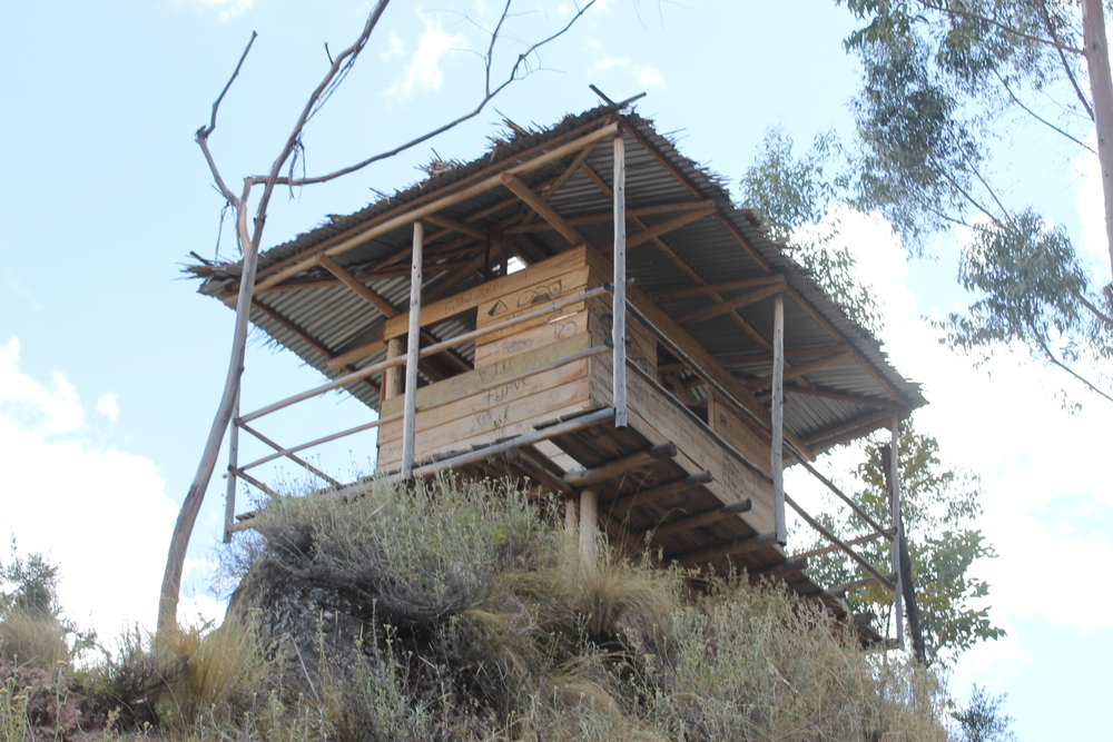 the goal: the treehouse