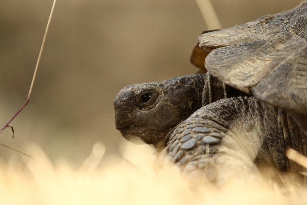 tortoise-1687664_1280.jpg