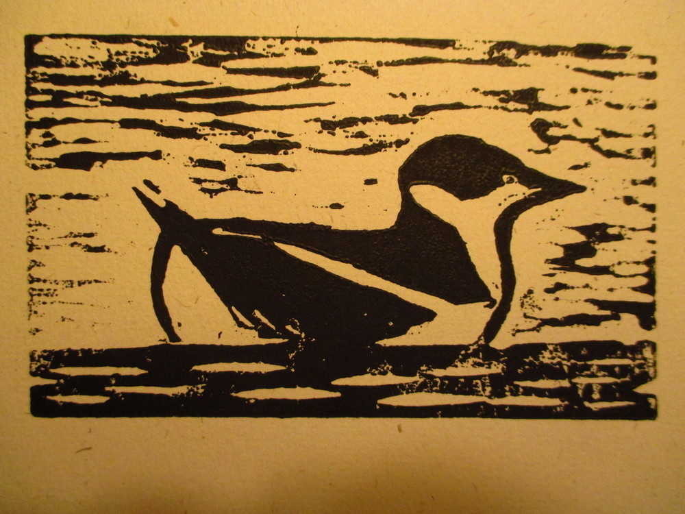 Marbled Murrelet at Sea by Manek Mistry, 2013