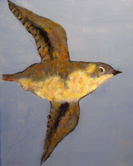A Marbled Murrelet in breeding plumage.                                        Art by Virginia P. Ruth 2013