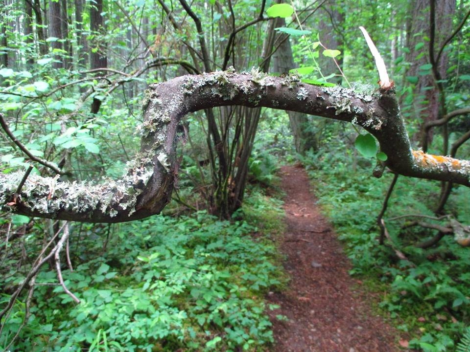 bent branch.jpg