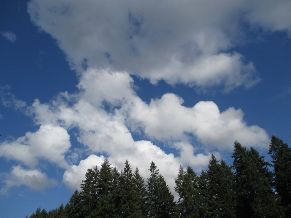 What kinds of clouds are these and why does author Maria Mudd Ruth want you to look up and notice them?
