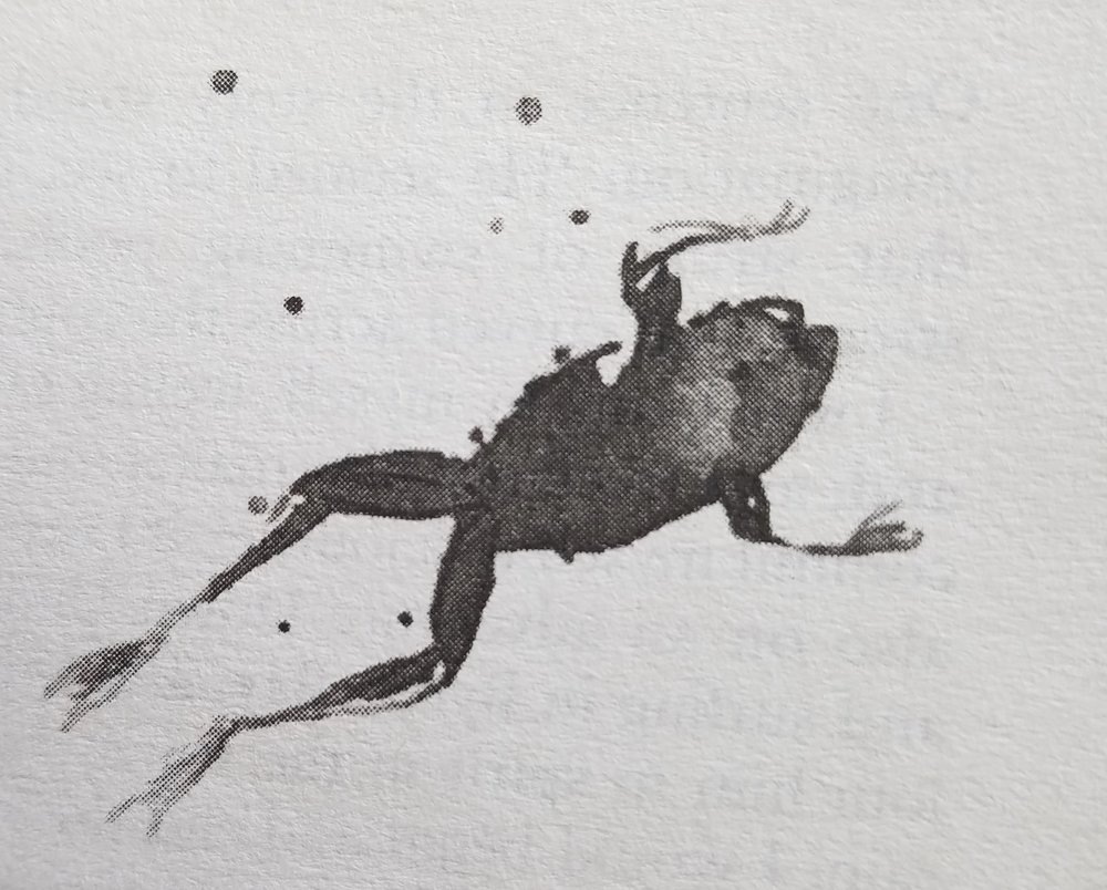 """Waterlog  enchants readers with its """"frog's-eye view"""" of the wild waters of the British landscape. (Illustration by David Holmes from chapter one of  Waterlog."""