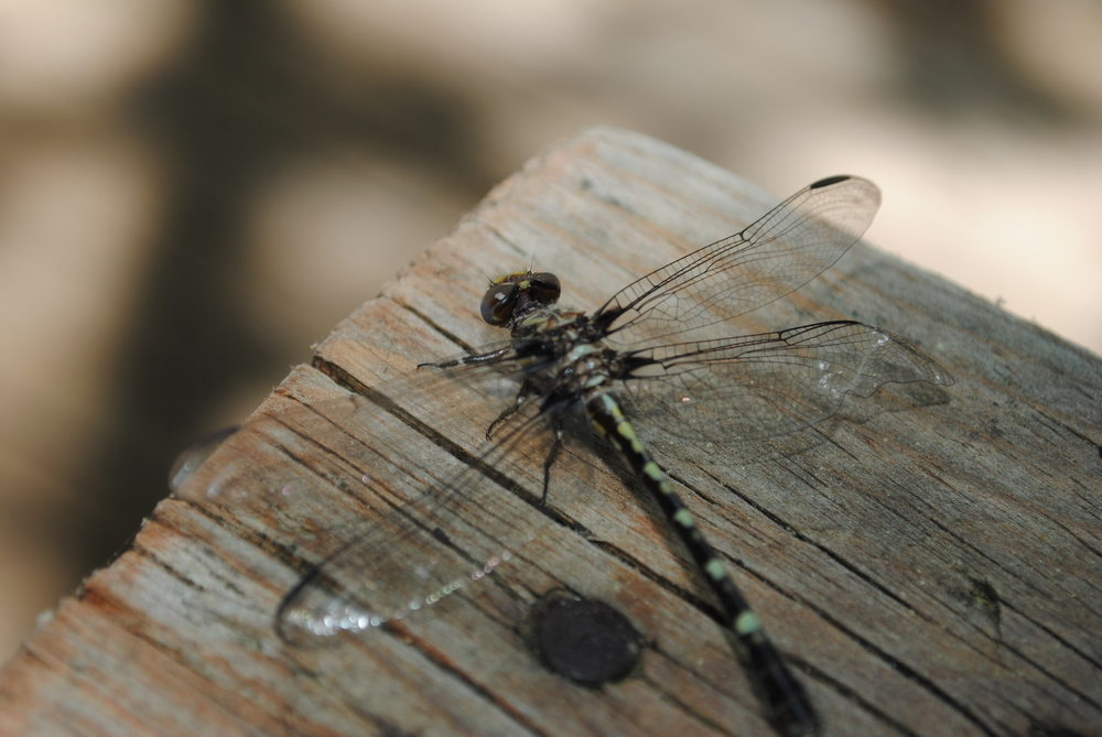 Dragonflies were all around me this past weekend. They are symbols of change and transformation.