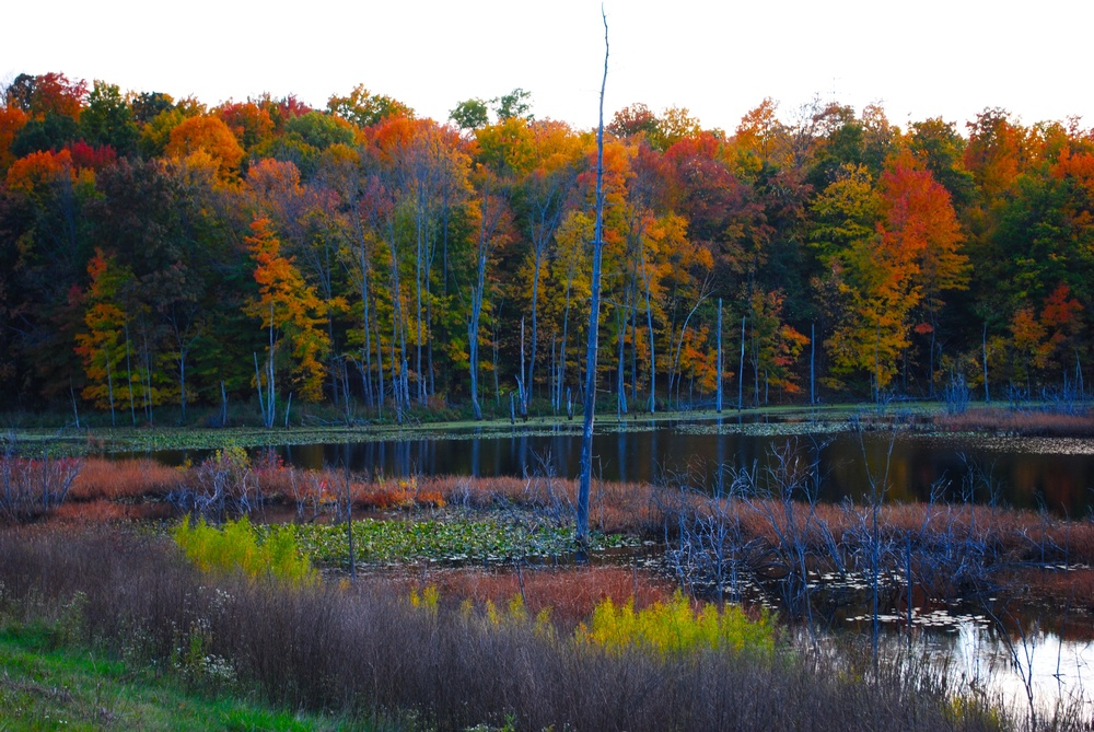 Off M-37 Near Half Moon Lake | Photo Credit: Terri Spaulding