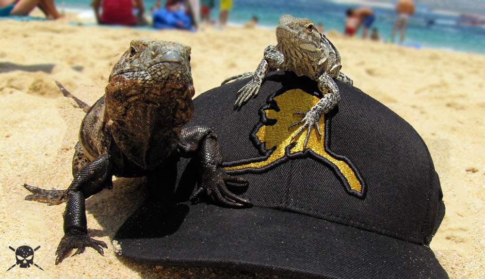 IMAGEFRONT-lizards.jpg