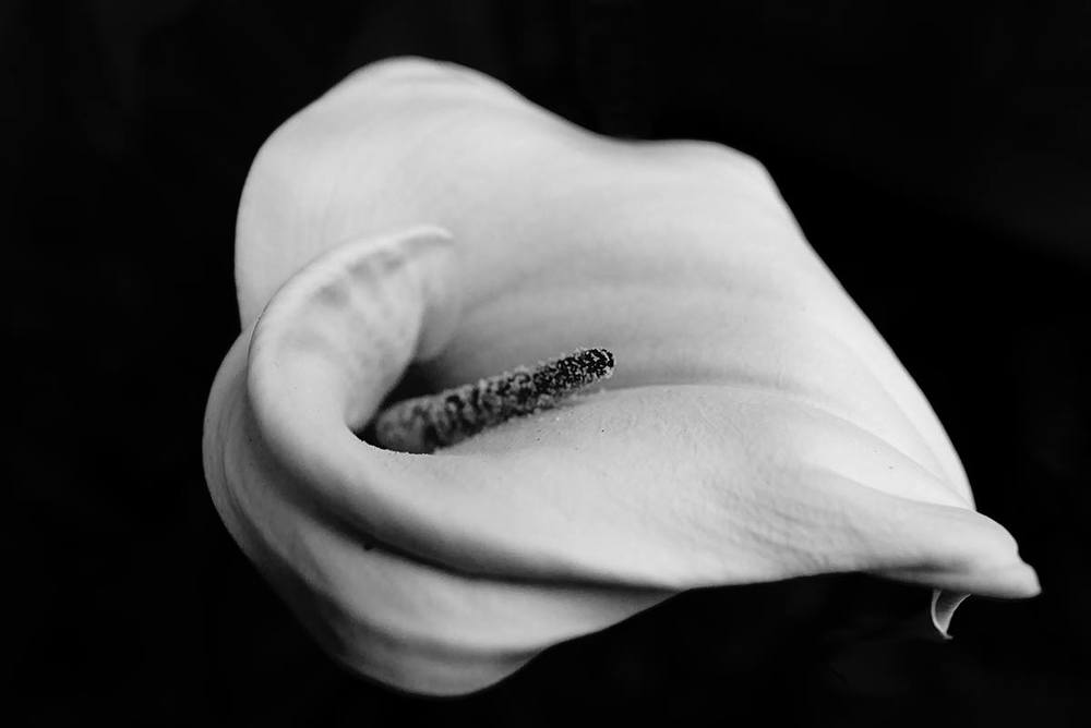 Nature In Black White Francesca Scalpi