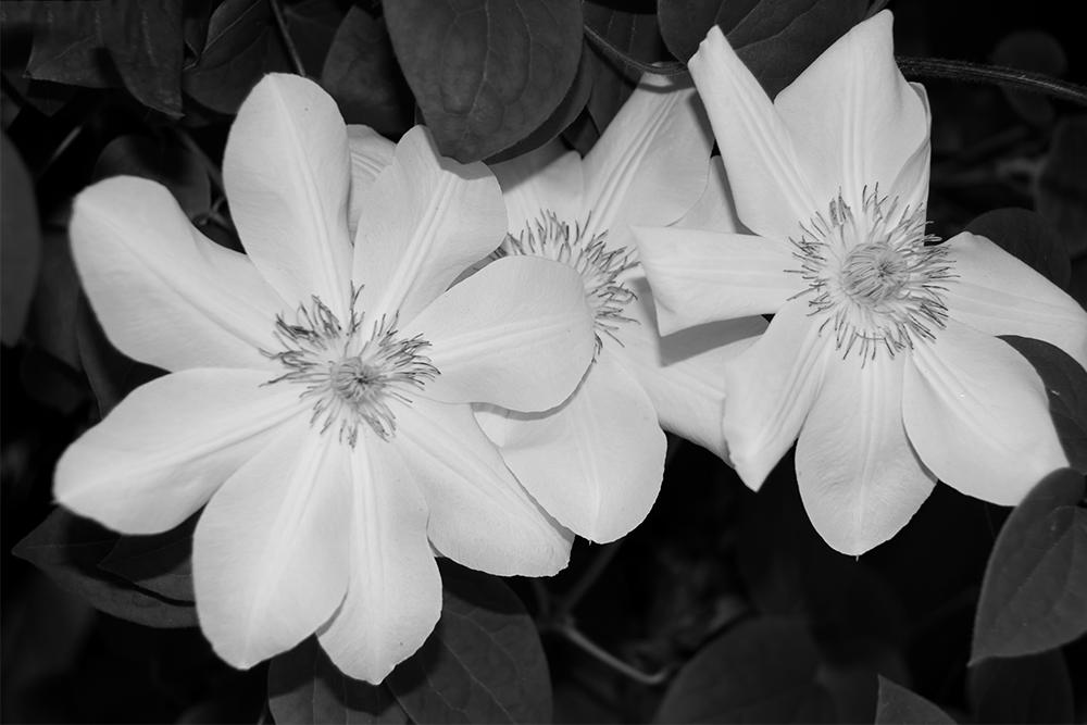 Nature In Black White Francesca Scalpi