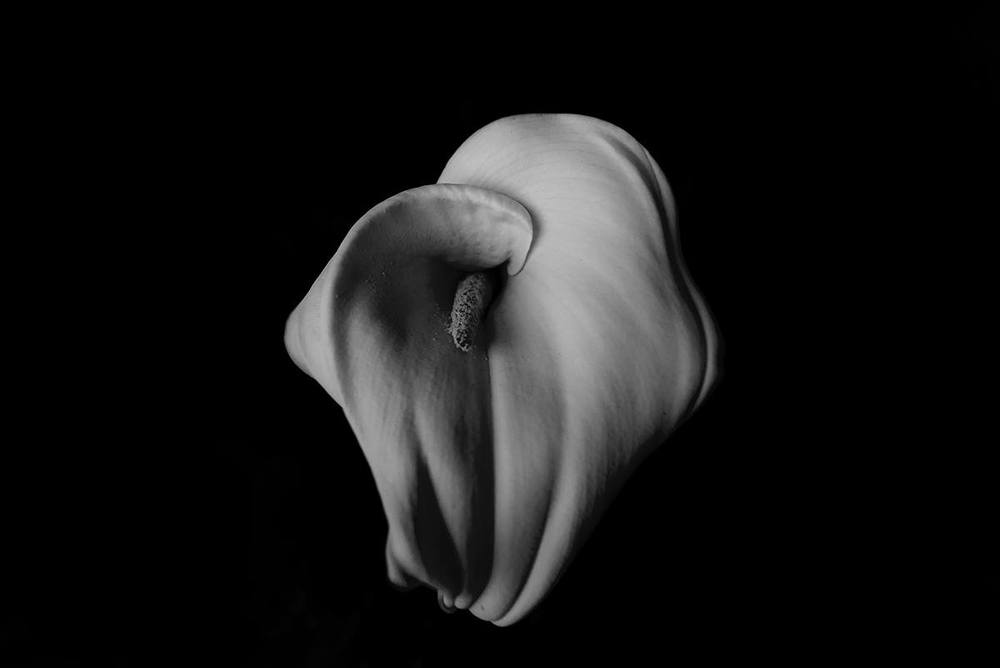 bwflower1.jpg