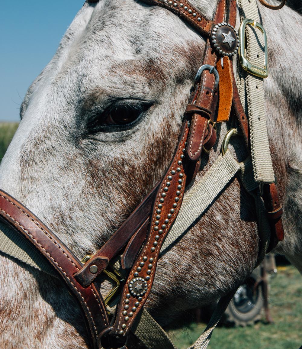 Stallion Stare.jpg