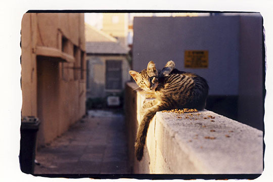 at_cat.jpg