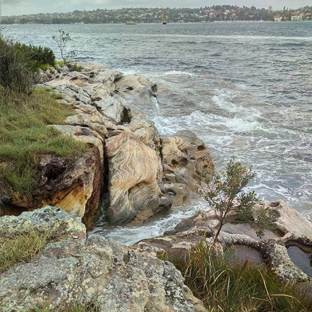 Lots of amazing nature walks to go explore at Nielson park! - - - - #exploresydney #hostellife #sydney #australia #bondi