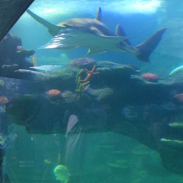 The aquarium in darling harbour is an amazing day excursion! - - - - #sydney #australia #ocean #aquarium #hostellife