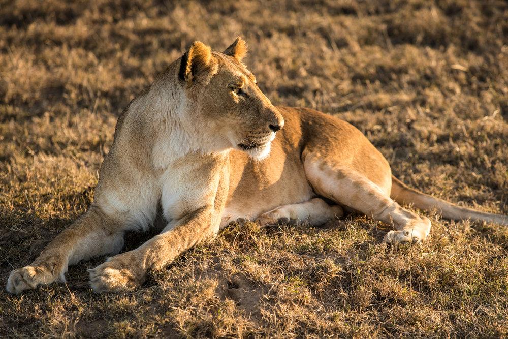 Kenya (2017)
