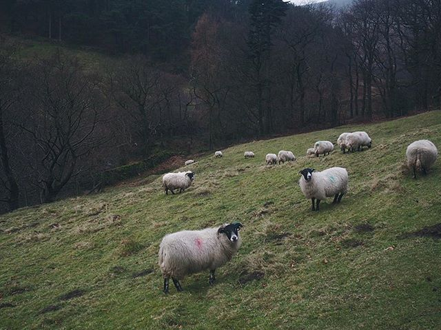 Went on a hike with some sheepies!