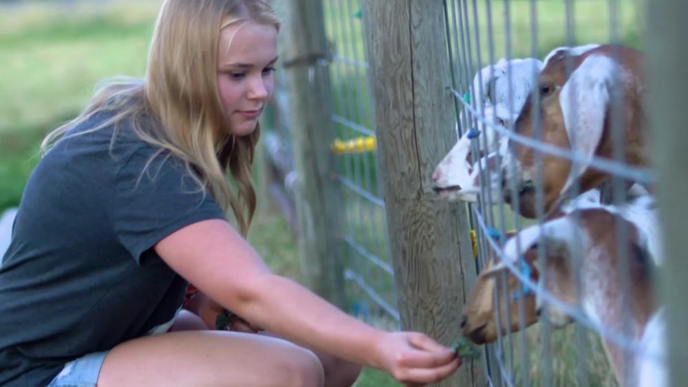 feeding-goats.png