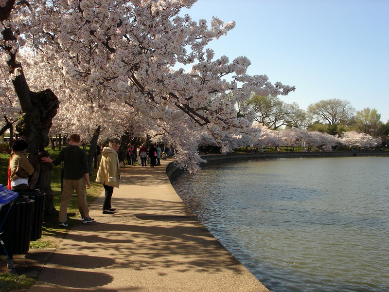 Tilting Tidal Basin Path.jpg
