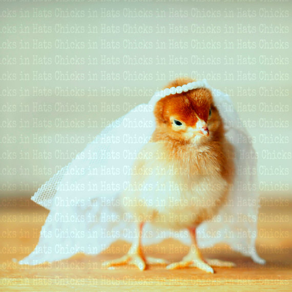 Greeting Card Chick in Bridal Veil by  chicksinhats