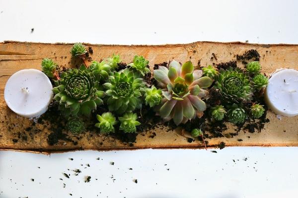 rustic succulent centerpiece