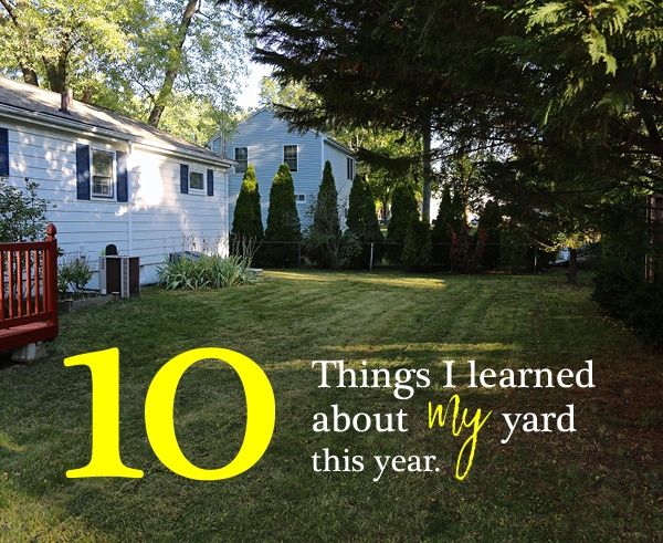 10 Things I learned about my yard this year