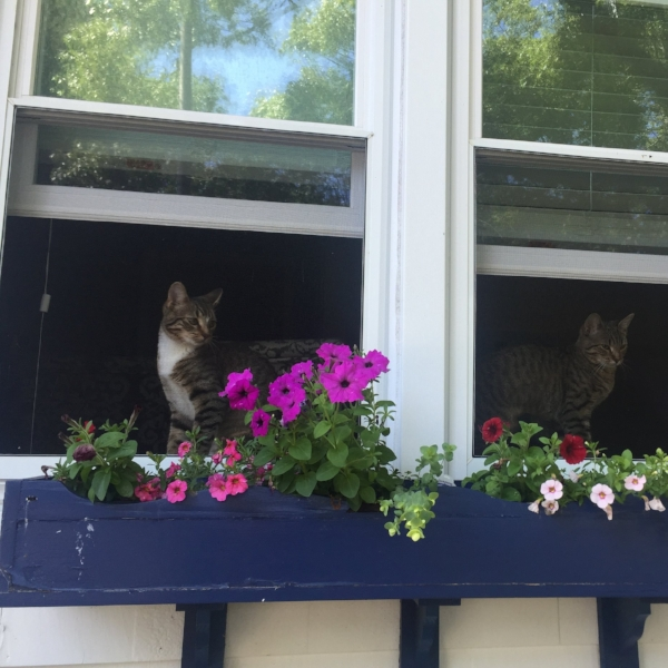 plants in window boxes