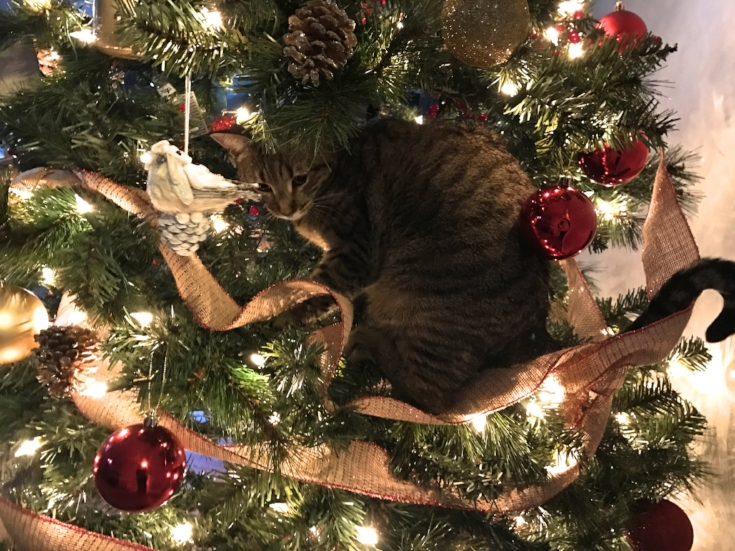 cat+in+the+tree.jpeg