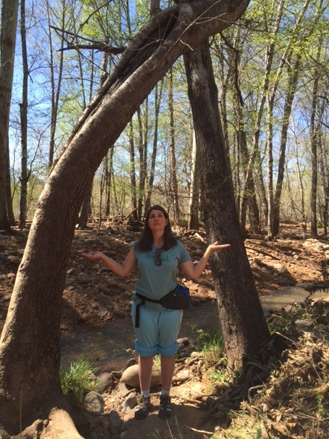 stargate tree.JPG
