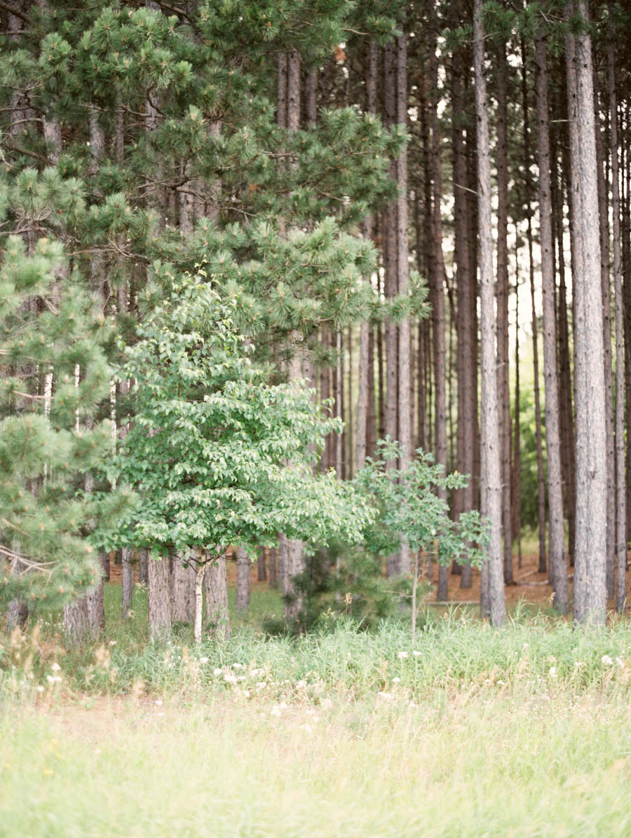 Meghan Mehan Fine Art Film Photography | Belle Lumiere Submission - North Woods Summer - 001.jpg