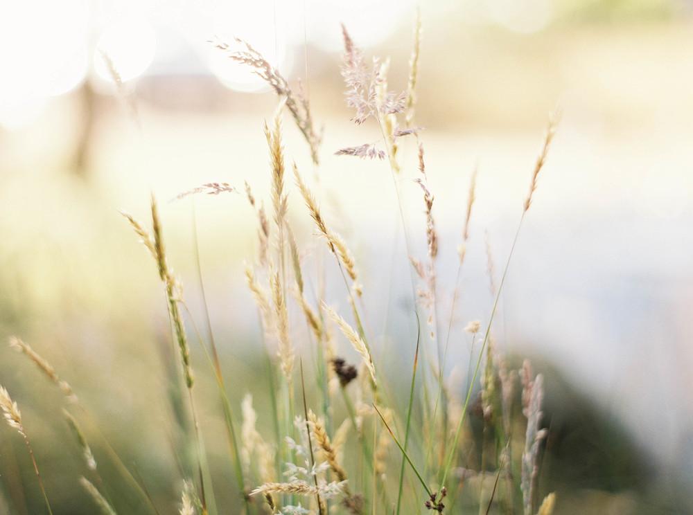 Meghan Mehan Fine Art Photography - Elk, California - Details - 011.jpg