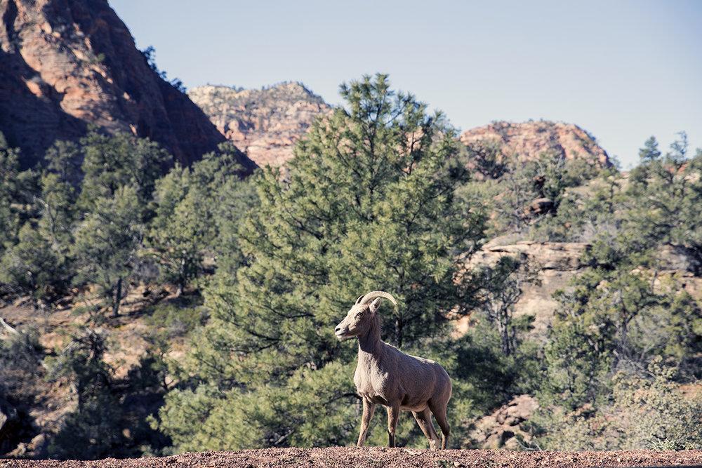 Zion-Utah-Jesse-Callahn-1.jpg