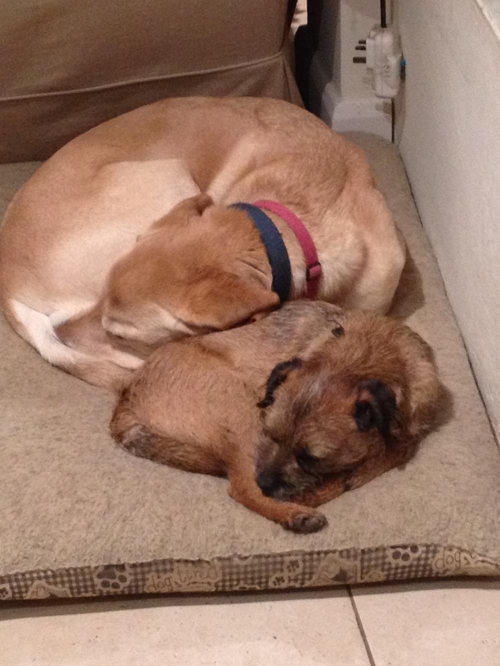 Twiglet & Ruby