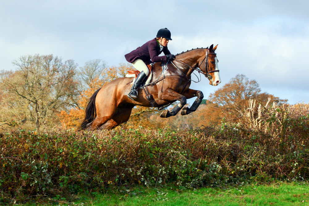 Bert jumping his first hedges at Balcombe