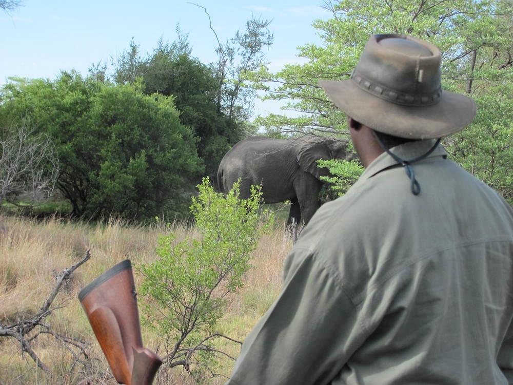 Bongwe and Elephant.JPG