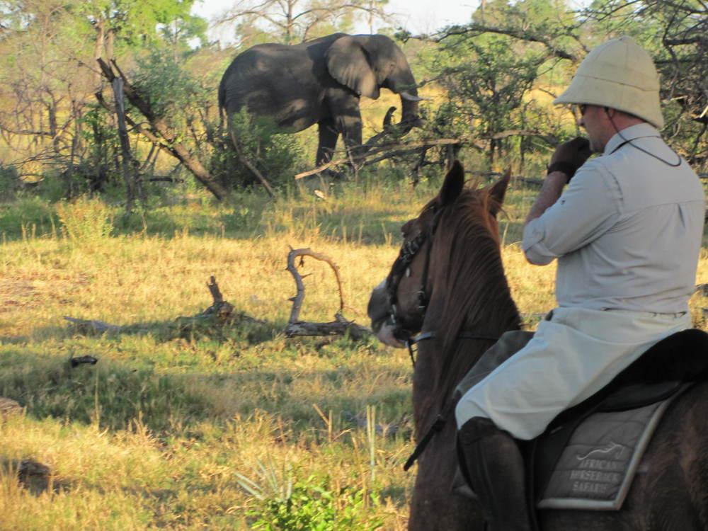 Great White Hunter & Elephant 2.JPG