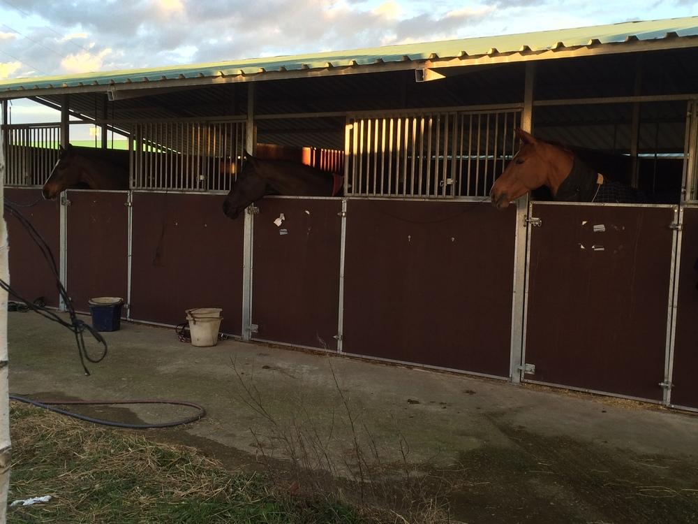 Horses looking very happy in Valloria la Bueno