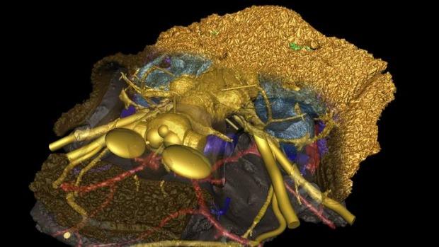 A computer model of a Romundina based on scan data from the 2 cm long Romundina skull.  Photo: Uppsala University