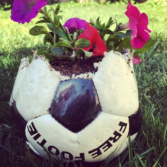 Ball got wrecked, so we're giving it a new life. #gardening #garden #soccer #yeg #recycle #flowers