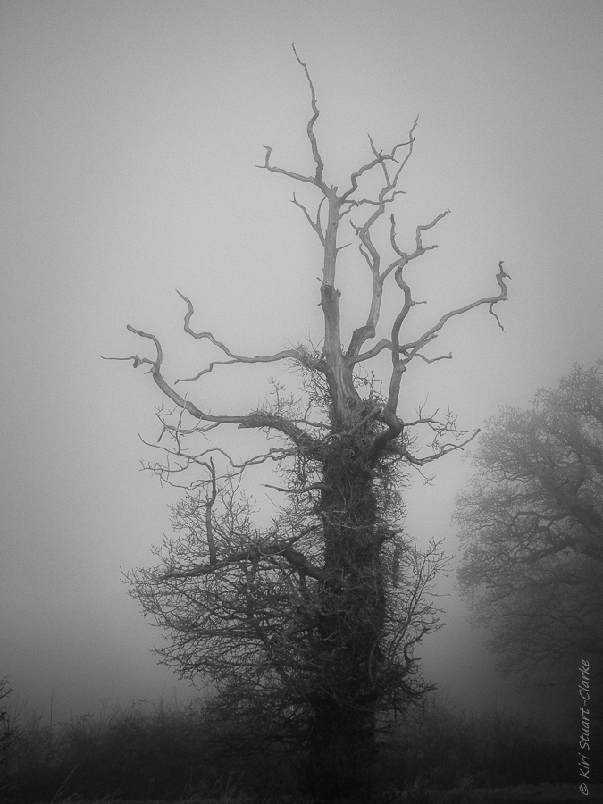 The lightning tree in mist