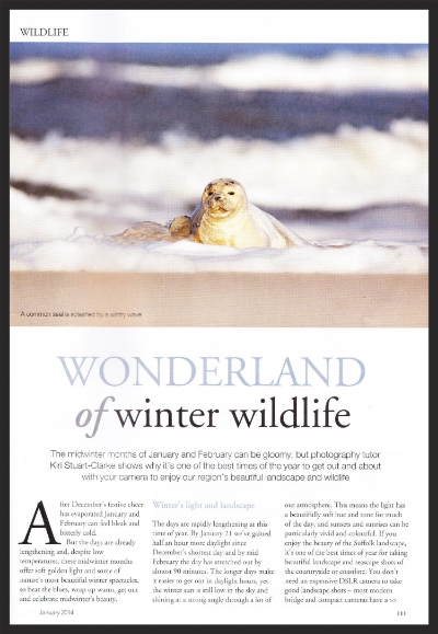 Winter Wonderland Article