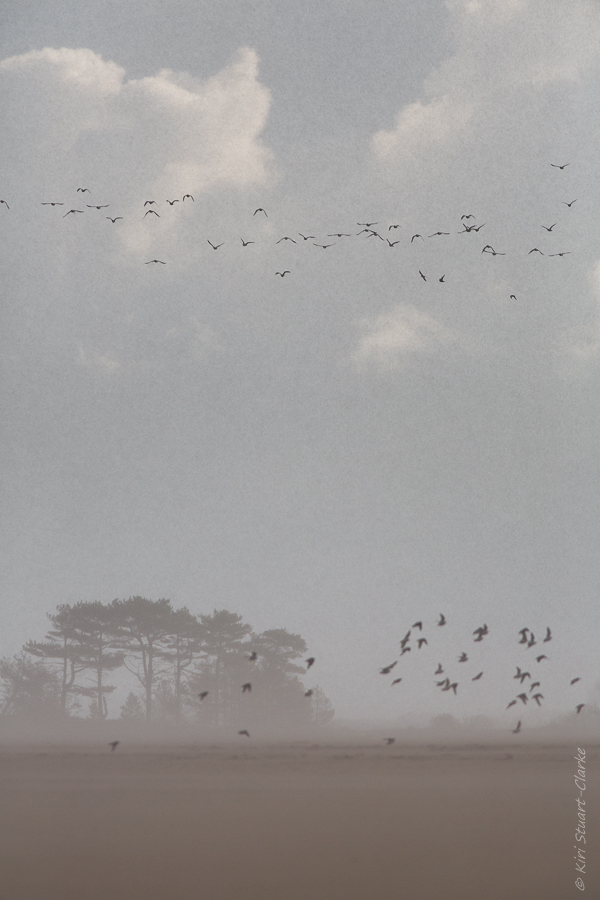 Birds fleeing hailstorm squall
