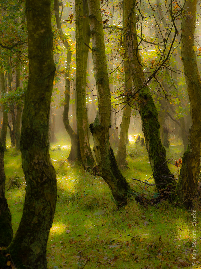 Hazy Woodland in Autumn