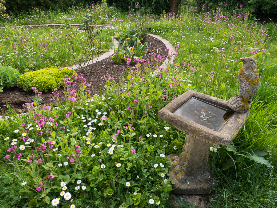 Red Campion and white Daisies surround the bird bath in the Old Rose Garden at Nar Cottage